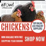 efowl.com